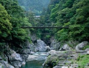 時効警察はじめましたの仏像や吊り橋のロケ地はどこ?橋